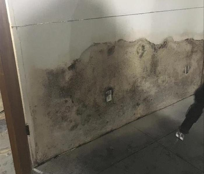 Mold in Commercial Building Before